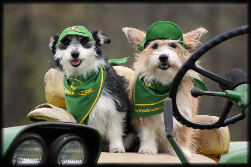 Dogs wearing John Deere