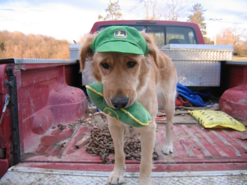 A dog that loves John Deere