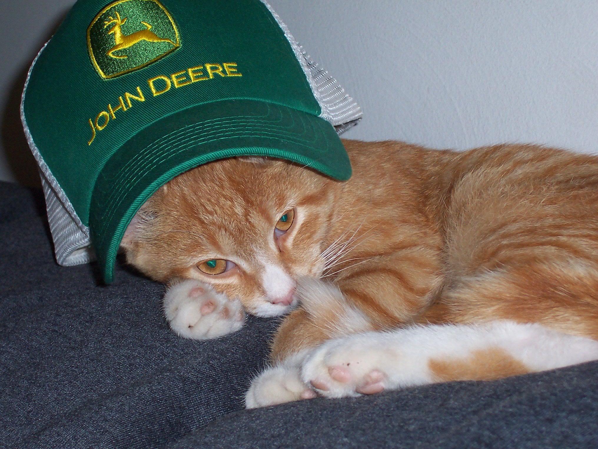 John Deere Gators >> John Deere Pets - Merchandise for The Animals in Your Life