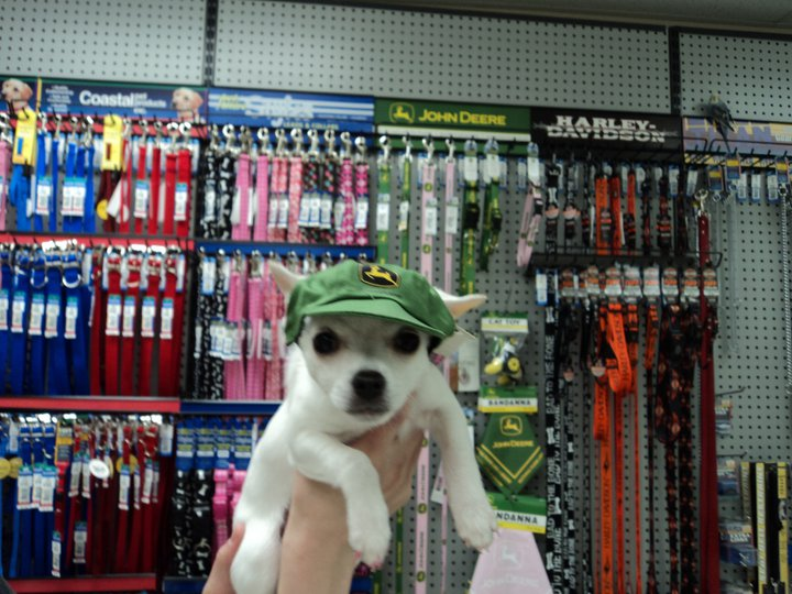 John Deere dog hats