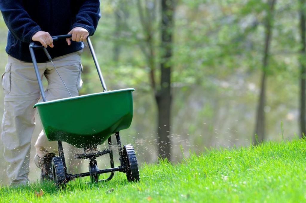 lawn care tips - fertilizing the lawn