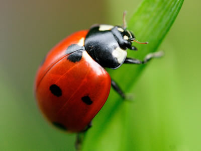 Lawn care tips - pest control