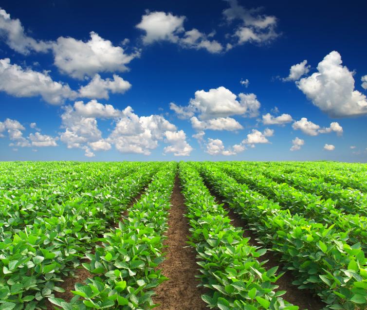 Row of Crops