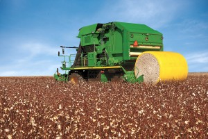 Cotton Production Reports for 2012
