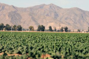 High heat, drought, and continued climate change could stress southwest crops.