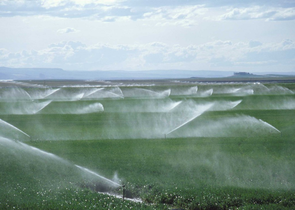 Agricultural Term - Irrigation