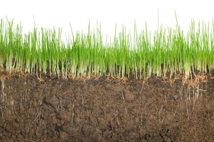 Soil measuring