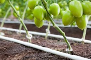The Urban Agriculture Expo will inform attendees on best practices in the expanding market