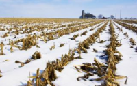 Colder than normal weather conditions affecting crop development
