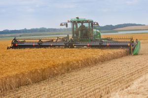 Kansas State University research shows an increase in mean temperatures could reduce wheat yields