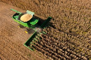 Corn and soybean harvest rates are behind yearly averages due to slow to mature crops