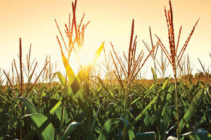 The USDA's Grain Stocks report backed up corn forecasts, but surprised with its soybean data.