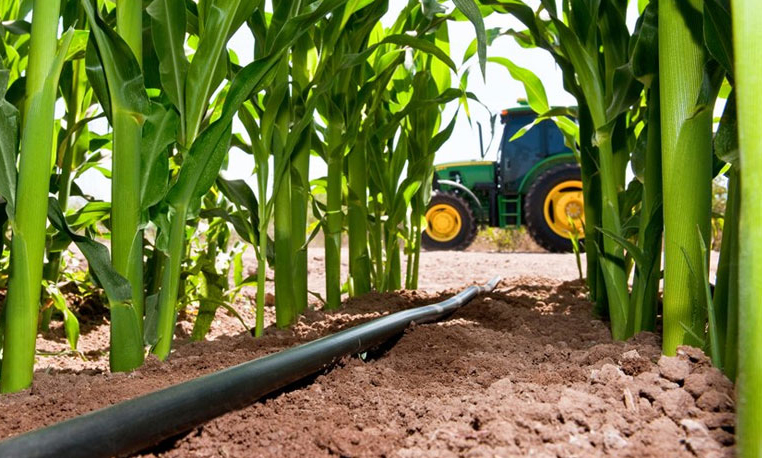 A Complete Guide Converting To Subsurface Drip Irrigation