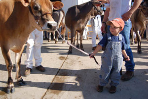 Children will have the opportunity to get up close and personal with dairy cattle at the 2015 Iowa State Fair.