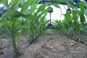 360 Y-DROP allows producers to apply nutrients to their crops with precision placement.
