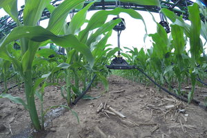 Early-season hail can cause damage to crops that are in the process of growing.