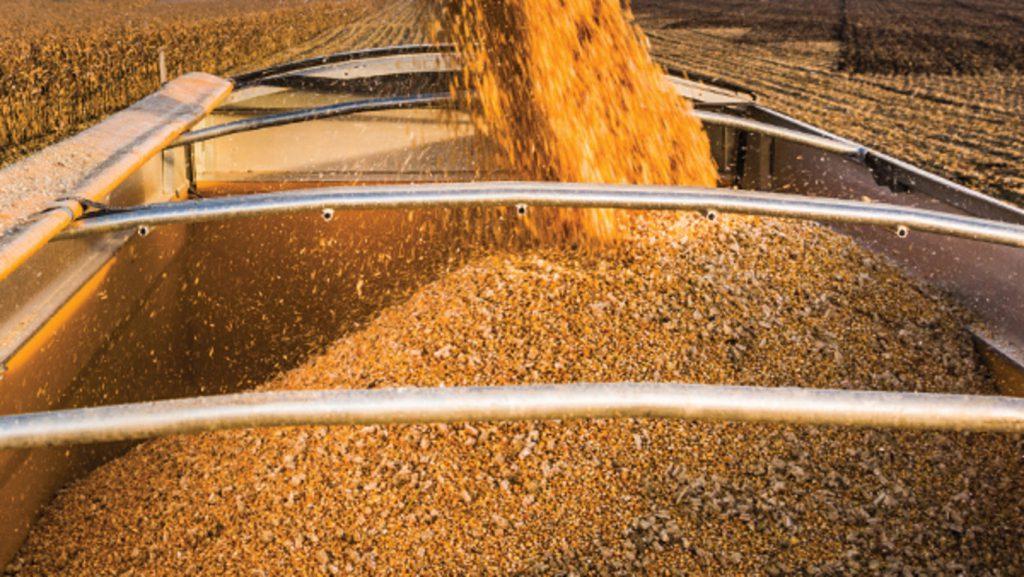 Corn in Truck