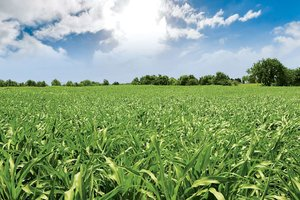 By letting grass grow steadily before grazing and ensuring effective fertilization, producers will see positive results across their fields.