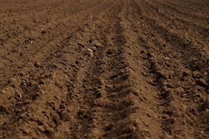Researchers have provided considerations for soil temperature and its impact on this season's planting schedule.
