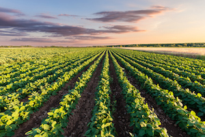 Producers should always carefully monitor their soil conditions—especially considering the late planting season this year for soybeans.