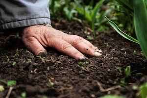 "Starter fertilizer, which is typically used near the seed at planting time, will help to ""jump-start"" growth in the spring."