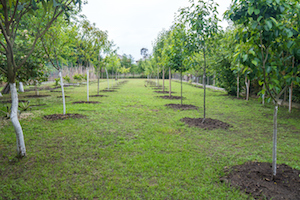 Watering, pruning, and staking trees are things to focus on when considering how to care for your newly planted trees.
